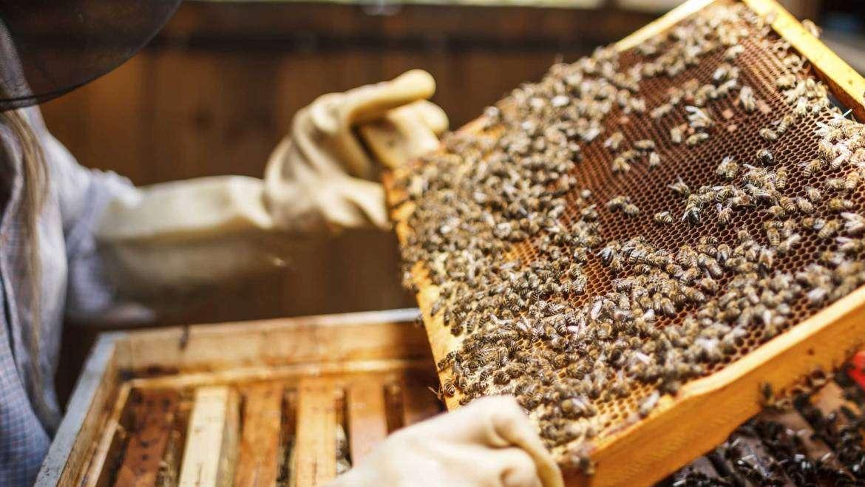Tutorial: Beekeeping for Beginners. Breeding Bees