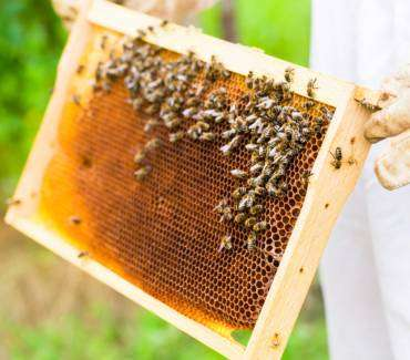 Spring Break for Millions of Bees and Their Keepers